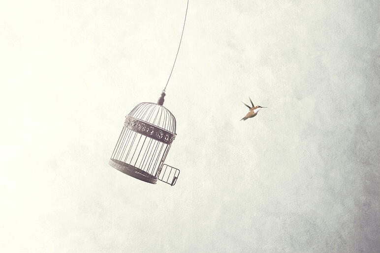 Bird escaping a cage
